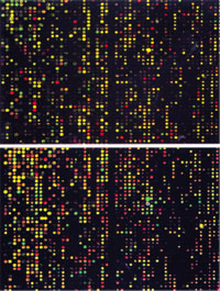 microarray-226x300 copy