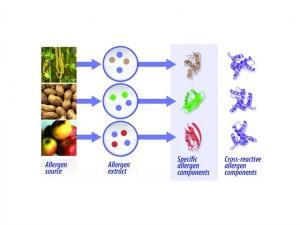 1405 CLP-Reinhardt Allergy testing_041114 MS.03Figure 1_highres_phadiaPPT_12d_Clear