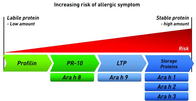 Figure 2. Allergic risk associated with protein families. Certain food protein classes, such as storage proteins, are more likely to cause clinical symptoms. Stable food proteins are also likely to cause more severe symptoms and reactions than labile proteins. Thus, sensitization to peanut components Ara h 8 and Ara h 9, both lipid transfer proteins (LTPs), poses less risk than sensitization to storage proteins Ara h 1, Ara h 2, and Ara h 3.
