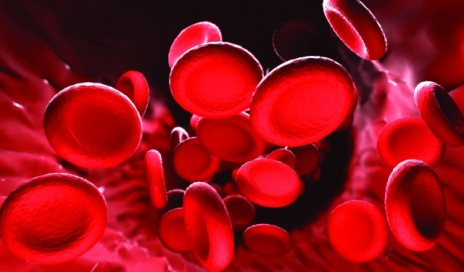 _blood_cells_1 640